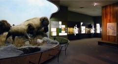 Manitoba Museum 7